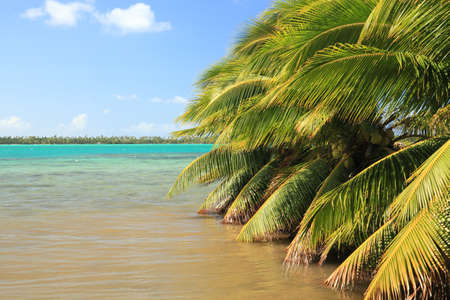 Palm Trees in Raiatea Lagoon on a Sunny Day. French Polynesia, South Pacific