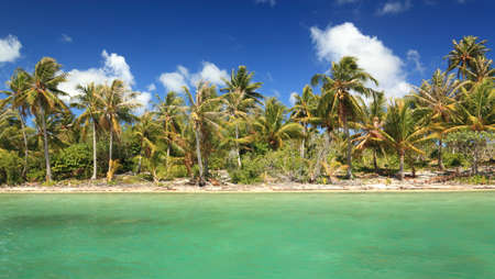 palms: Dreamlike Island in the South Pacific with Coconut Trees and Turquoise Water.