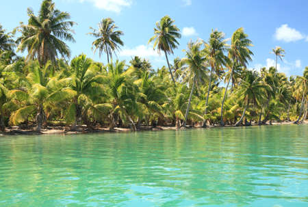 Dreamlike Island in the South Pacific with Coconut Trees and Turquoise Water.   photo