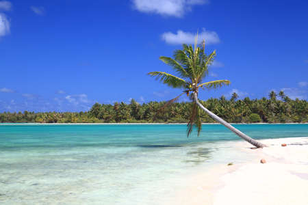polynesia: Lonely Coconut Tree on Dreamlike Island in the South Pacific Surrounded by Turquoise Water.