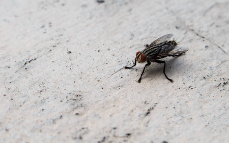 contagious: Insects fly close to nature