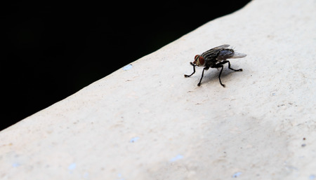 malady: Insects fly close to nature
