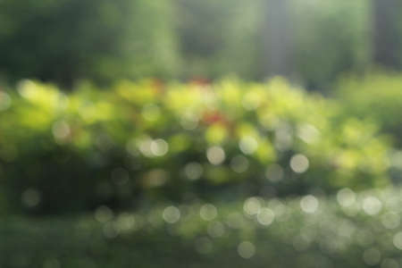 Abstract blurred outdoor garden for background.