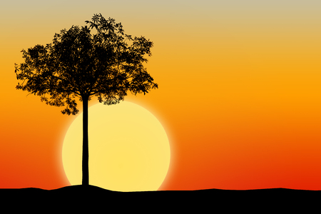 Silhouette of tree with sunset background. Stock Photo