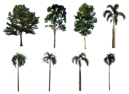Trees Collection on white background. With clipping path, Isolated Trees. Фото со стока