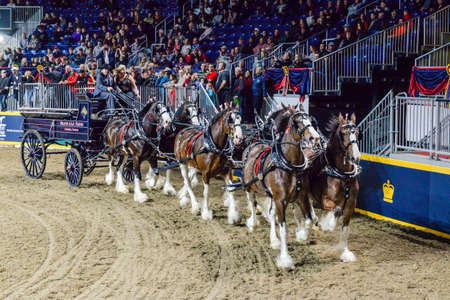 November 4, 2017. Toronto, Canada. Rider is competing during the Royal Horse Show at throughout The Royal Agricultural Winter Fair on November 3-12, 2017 at Ricoh Coliseum in Toronto, Canada Editorial