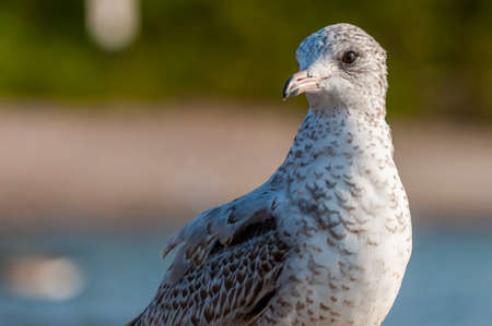 The close up portrait of seagull bird Stock Photo