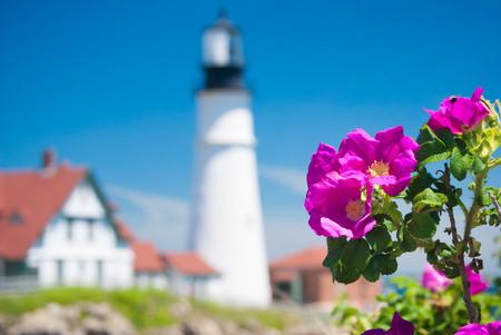 portland: Wild Roses At Portland Head Lighthouse