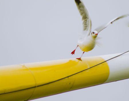 Bird flying away from a ship mast Stock Photo
