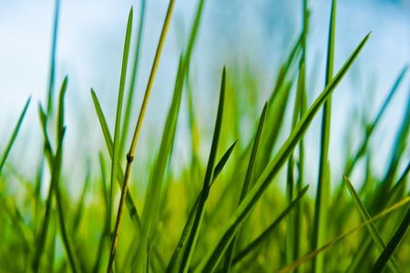Green grass in a close up Stock Photo