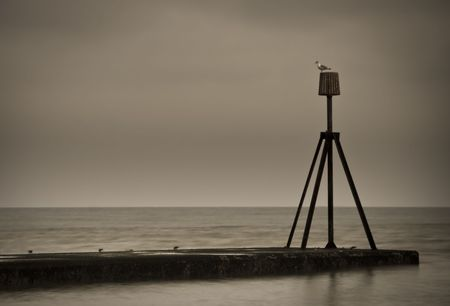 The sea and a sea gull Stock Photo