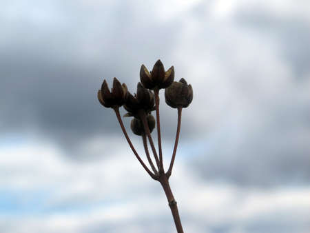 dried flowers in the wind photo