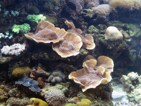 seabed Stock Photo - 17606990