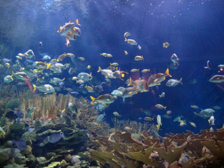 seabed Stock Photo - 17606989