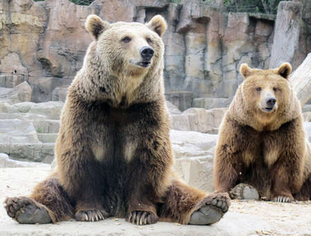 studio zoo: grizzly