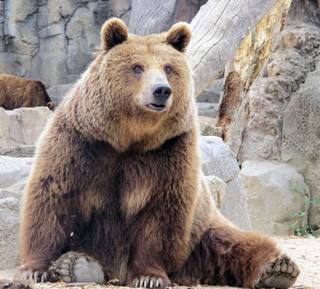 grizzly Stock Photo - 18152777