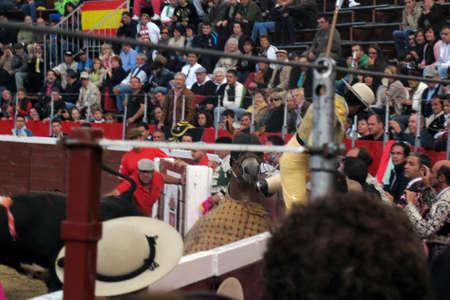 corrida de toros: toros Editorial