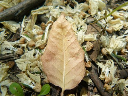 The dry leaf lies on the earth Stock Photo