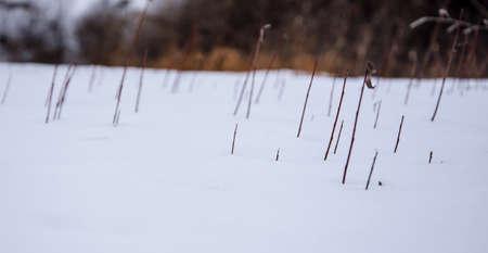 wetland conservation: Wind, winter