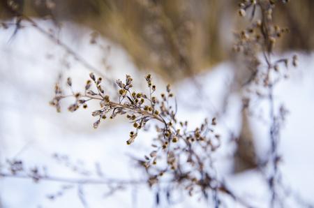 Plant, macro photo