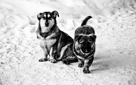 puppies: puppies