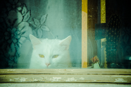 Cat on the windon photo