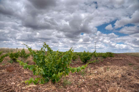 workable: Viedos field in southern Spain Stock Photo