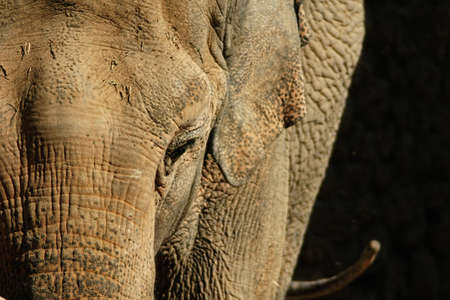 living beings: Large mammals, elephant