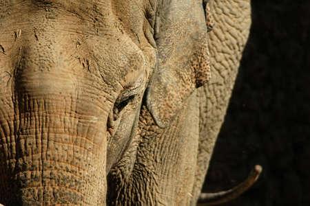 los seres vivos: Los grandes mamíferos, elefante