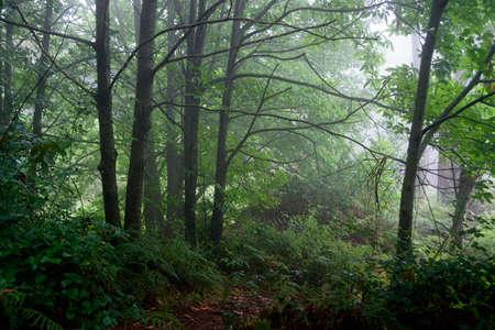 mediterranean forest: Beautiful Mediterranean forest Stock Photo