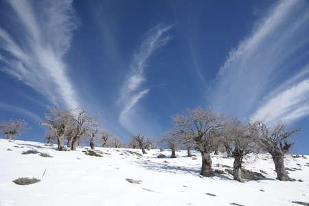 sierra snow: Sierra de las Nieves in the province of Mlaga