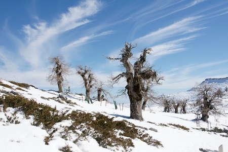 sierra snow: arrival of the winter station of the Sierra de las Nieves, Mlaga