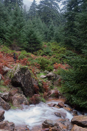 mediterranean forest: Beautiful Mediterranean forest, Sierra Bermeja, Estepona