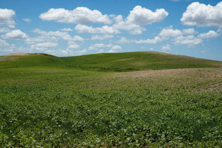 workable: Beautiful field of green crops