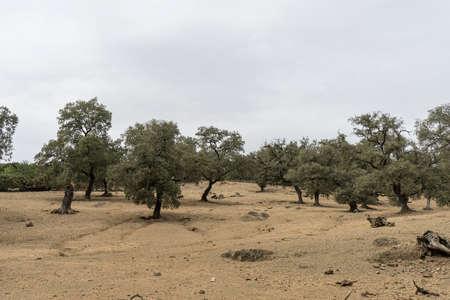 huelva: Dehesa de Huelva, Andalusia