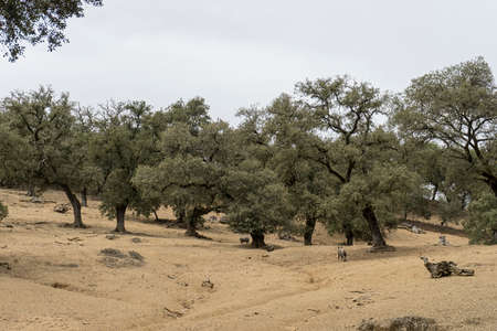 workable: Dehesa de Huelva, Andalusia