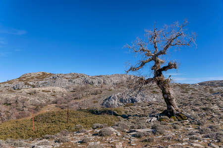 Natural landscapes of the Natural Park of Sierra de las Nieves in the province of Malaga, Andalusia
