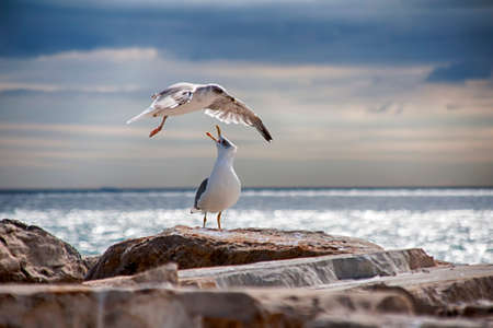 living beings: Seagulls