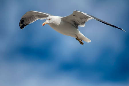 living beings: seagull Stock Photo