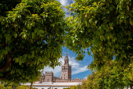 Views of the Giralda from the Patio de Banderas in the beautiful city of Seville