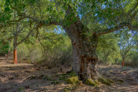 Mediterranean forest in southern Spain, Andalusia