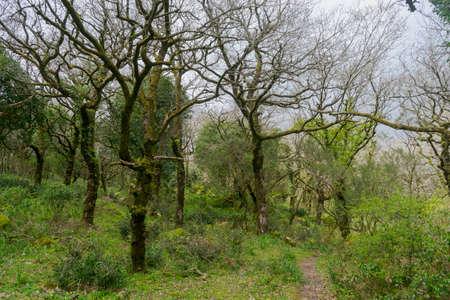 Jurassic Forest inside the natural park of the Alcornocales, Andalusia