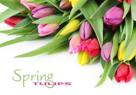 primavera: Flores de tulipanes de coloridos primavera fresca sobre fondo blanco Foto de archivo