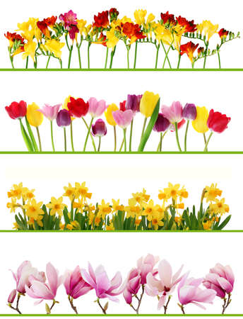 row: Colorful fresh spring flowers borders on white background. Tulips, daffodils, fresia, magnolia.