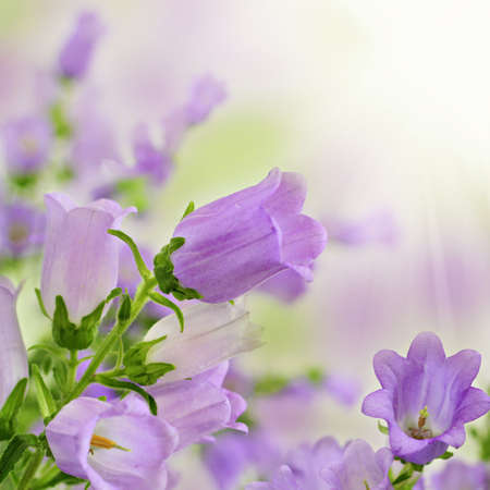 Beautiful purple flowers in spring summer garden on blurry bokeh backgrund Stock Photo