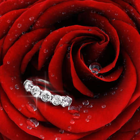 Macro closeup of red rose with dew drops and beautiful sparkling diamond ring photo