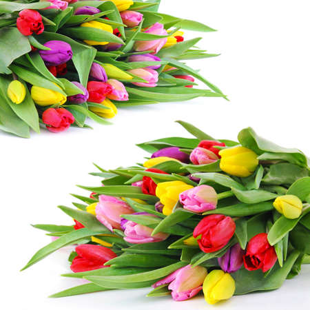 Colorful fresh spring tulips flowers on white background Stock Photo