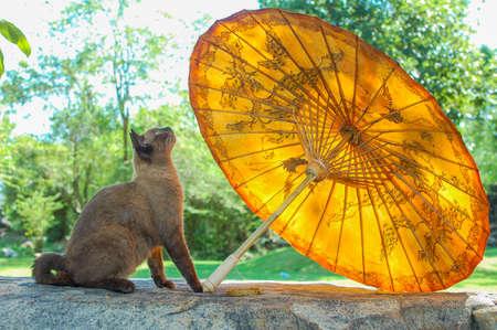 umbella: a cat starring at a paper umbrella Stock Photo