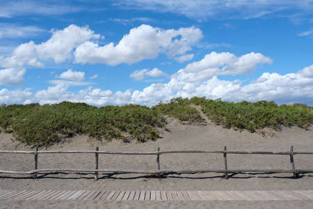 Mediterranean bush on a beach, beyond a wooden fence with a catwalk on the sand to walk along the shore, on a beautiful sunny day with a blue sky with scattered white clouds. Typical scene of the italian west coast. Tuscany beach.