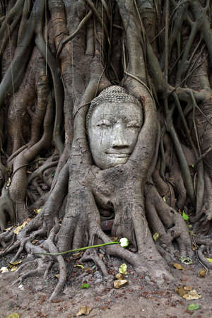 Famous buddha head strangled by tree at Wat Mahathat in Ayutthaya, Thailand photo